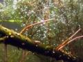 Bestandsaufnahme Vegetation Haselbacher 2014